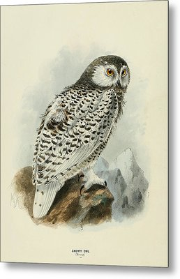 Snowy Owl 1 Metal Print