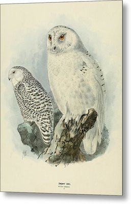 Snowy Owl 2 Metal Print by Rob Dreyer