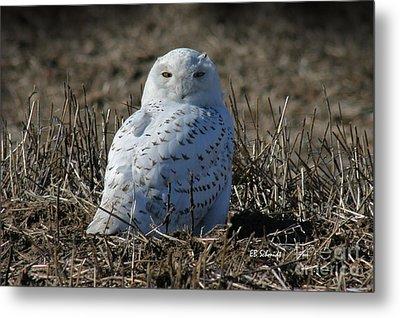 Snowy Owl Metal Print by E B Schmidt