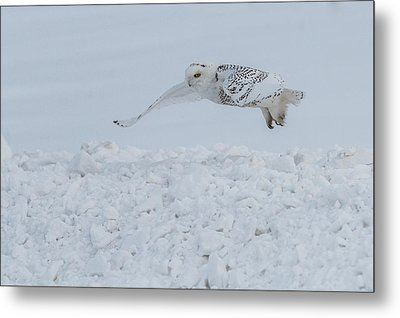Metal Print featuring the photograph Snowy Owl #1/3 by Patti Deters