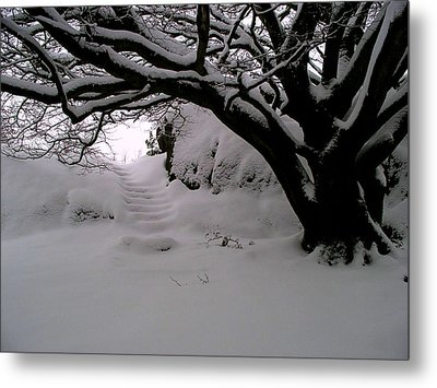 Snowy Path Metal Print by Amanda Moore