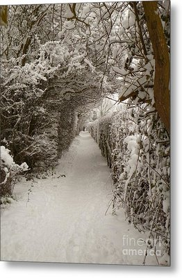 Snowy Path Metal Print by Vicki Spindler