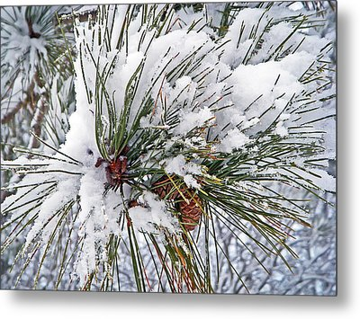 Snowy Pine Metal Print by Aimee L Maher Photography and Art Visit ALMGallerydotcom