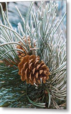 Snowy Pine Cones Metal Print