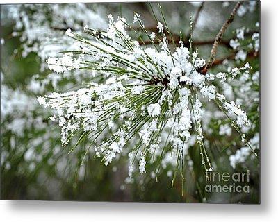 Snowy Pine Needles Metal Print by Elena Elisseeva