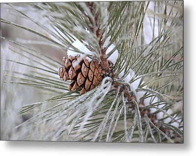 Snowy Pine Metal Print by Penny Meyers