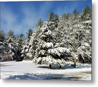 Metal Print featuring the photograph Snowy Pines by Janice Drew