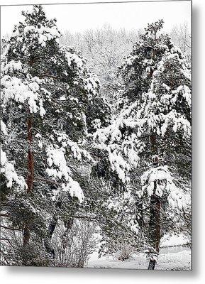 Snowy Pines Metal Print by Kathleen Struckle