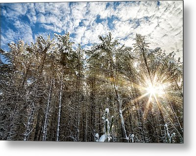 Snowy Pines With Sunflair Metal Print by Brian Boudreau