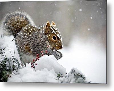 Snowy Squirrel Metal Print by Christina Rollo