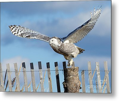 Snowy Takeoff Metal Print by Stephen Flint