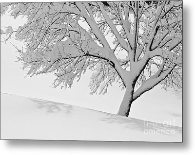 Snowy Tree Metal Print by Jay Nodianos