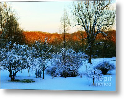 Snowy Trees In December Twilight - Pearl S. Buck Homestead Metal Print by Anna Lisa Yoder