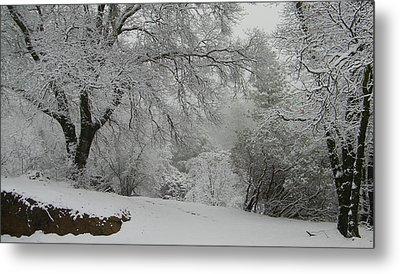 Snowy Trees Metal Print by Tom Mansfield