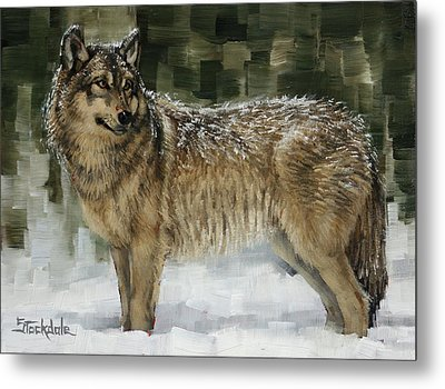 Snowy Wolf Metal Print by Margaret Stockdale