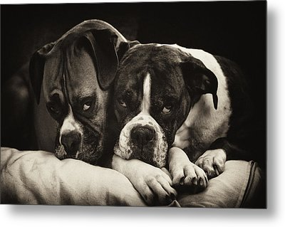 Snuggle Bug Boxer Dogs Metal Print by Stephanie McDowell