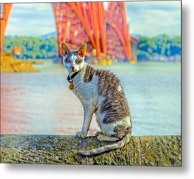 Snuggles The Cat Metal Print by Tylie Duff
