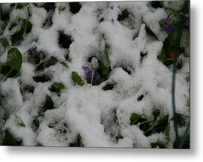 Metal Print featuring the photograph So Much For An Early Spring by David S Reynolds