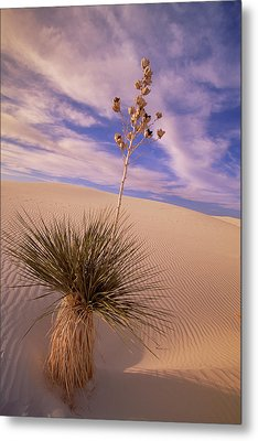 Soaptree Yucca  On Dune White Sands Metal Print by