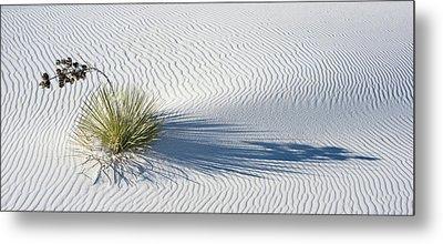 Soaptree Yucca Yucca Elata Metal Print by Panoramic Images