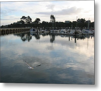 Metal Print featuring the photograph Soar by Dianne Levy