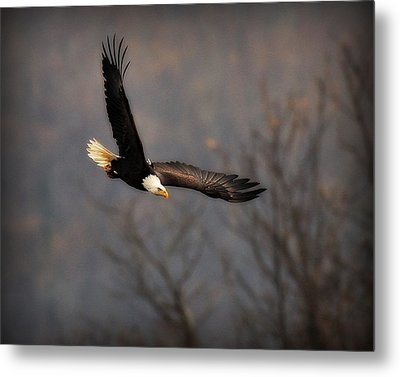 Soar Like An Eagle Metal Print by Angel Cher