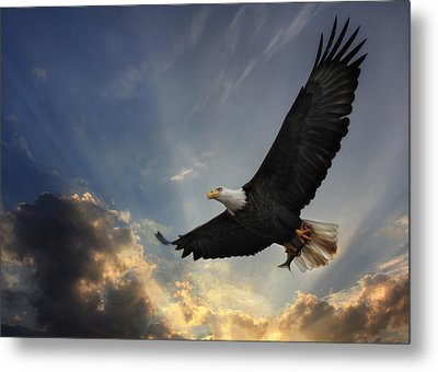 Soar To New Heights Metal Print by Lori Deiter