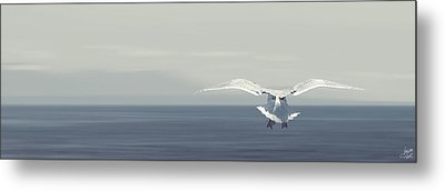Metal Print featuring the photograph Soaring Free by Lisa Knechtel