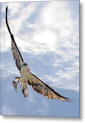 Soaring Metal Print by Julie Cameron
