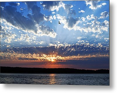 Soaring Sunset Metal Print by Anthony Baatz