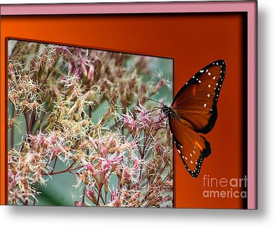 Social Butterfly 03 Metal Print by Thomas Woolworth