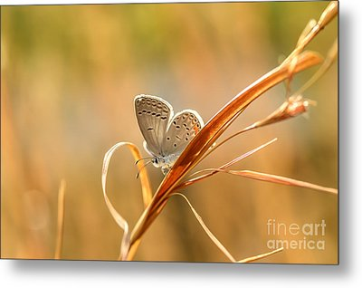 Soft Baby Blue Metal Print by Debbie Green