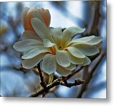 Metal Print featuring the photograph Soft Blooms by Rowana Ray