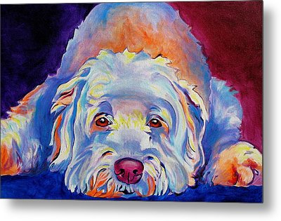 Soft Coated Wheaten Terrier - Guinness Metal Print by Alicia VanNoy Call