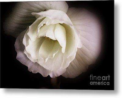 Soft Flower In Black And White Metal Print by John S
