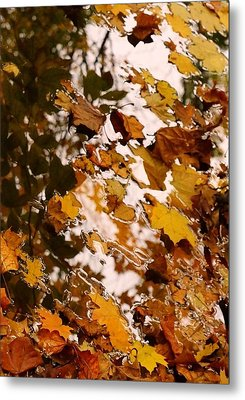 Soft Landing Metal Print by Photographic Arts And Design Studio