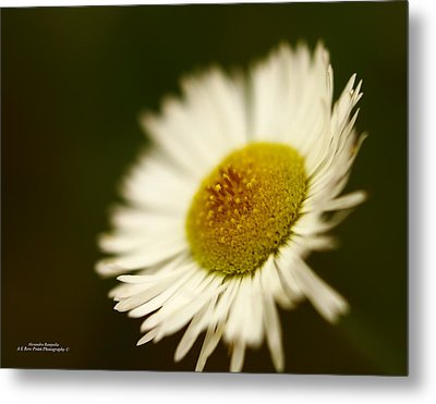 Soft Lighted Daisy Metal Print by Alexandra  Rampolla