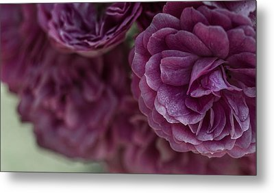 Metal Print featuring the photograph Soft Melody by Julie Andel