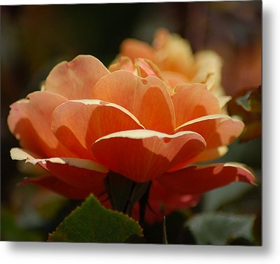 Soft Orange Flower Metal Print by Matt Harang