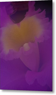 Metal Print featuring the photograph Soft Orchid by Ken Dietz