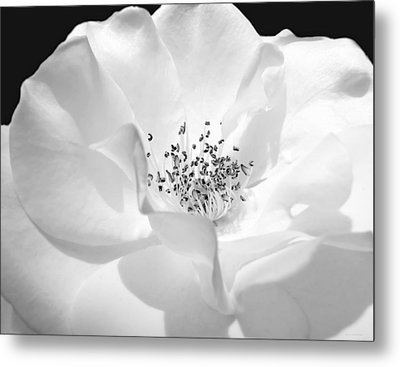Soft Petal Rose In Black And White Metal Print by Jennie Marie Schell