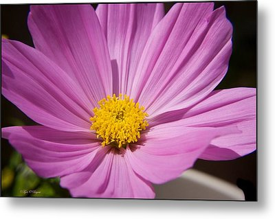 Soft Petals Metal Print by Tyra  OBryant