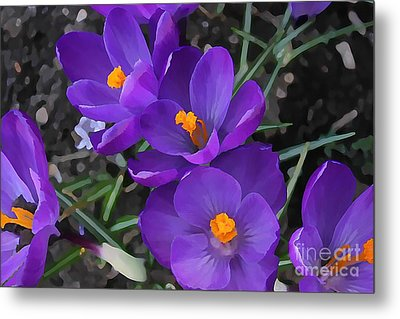 Soft Purple Crocus Metal Print