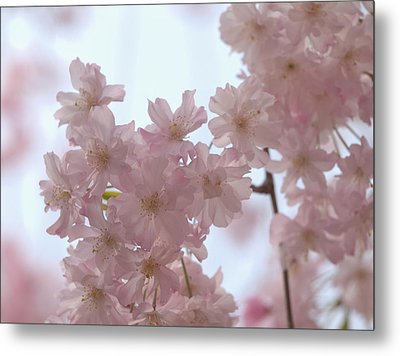 Metal Print featuring the photograph Soft... by Rachel Mirror