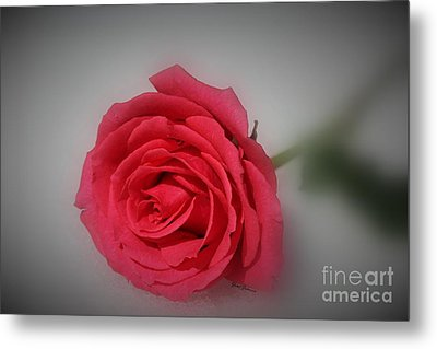 Soft Red Rose Metal Print by Yumi Johnson