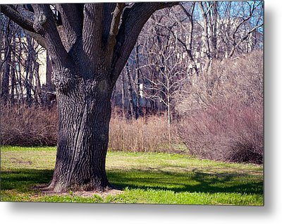 Soft Rosy Spring In The Garden Metal Print by Jenny Rainbow