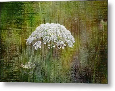 Soft Summer Rain And Queen Annes Lace Metal Print by Suzanne Powers