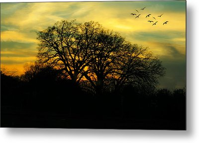 Soft Sunset Metal Print by Joan Bertucci
