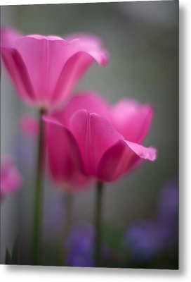 Soft Tulip Twilight Metal Print by Mike Reid