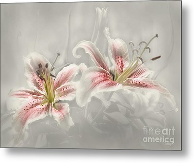 Soften Lilies Metal Print by Johnny Hildingsson